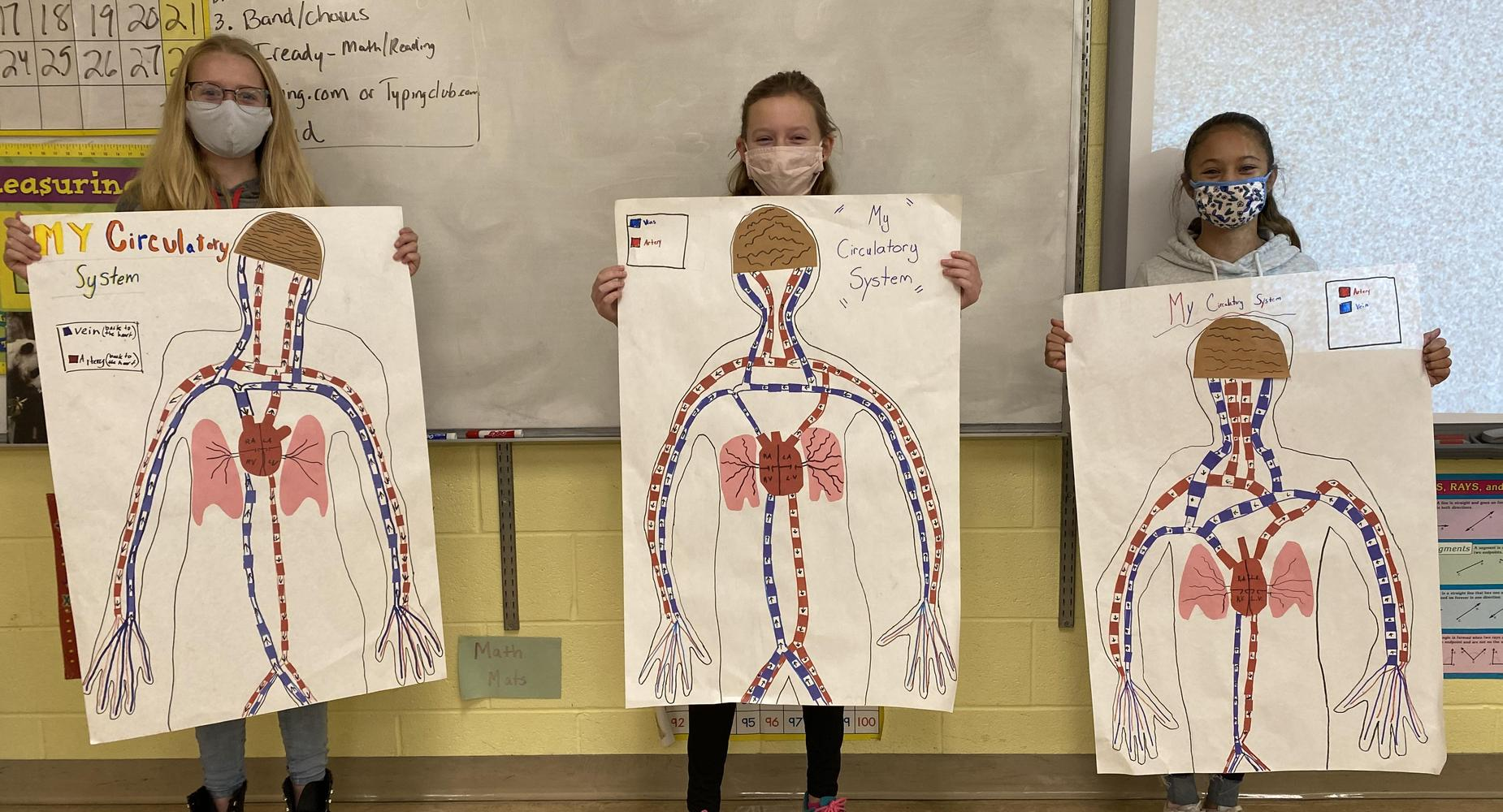 students with circulatory system examples
