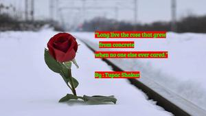Tupac quote over rose in snow image