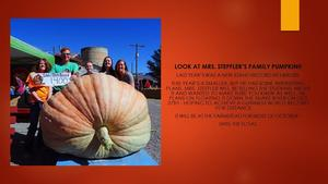 Giant pumpkin and family