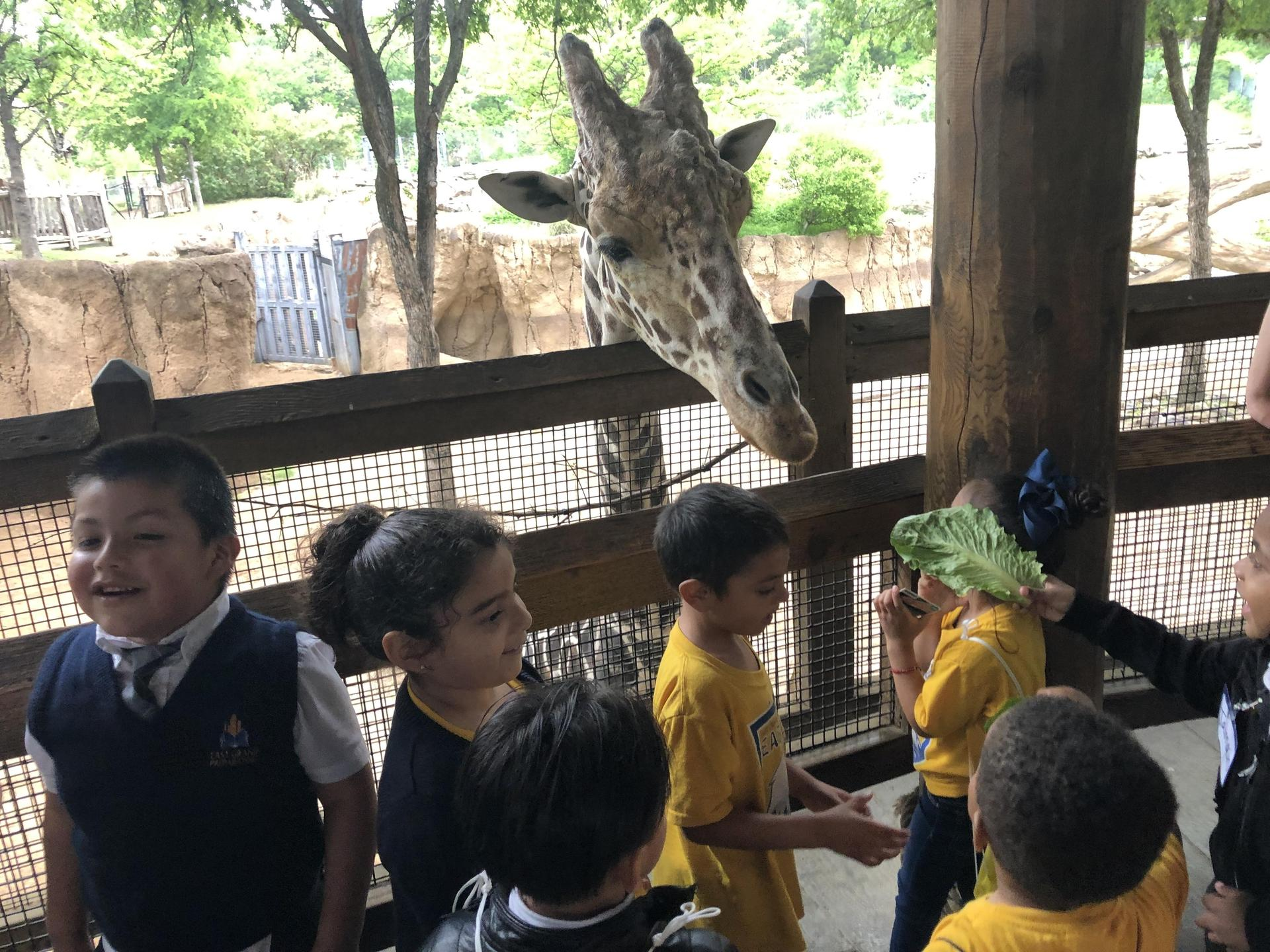PreK Dallas Zoo field trip