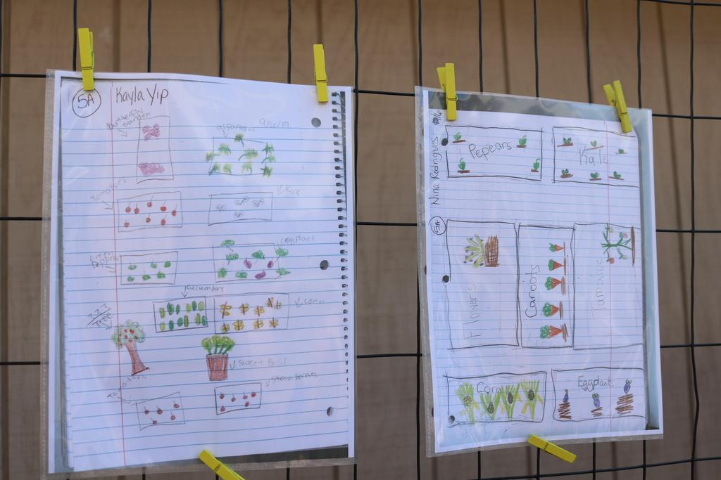 Photo of student drawings of plans for the garden.