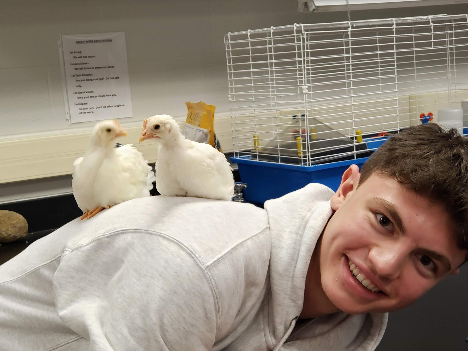 Lukas has chickens on back