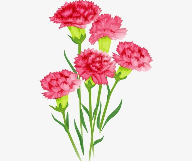 pink red carnations