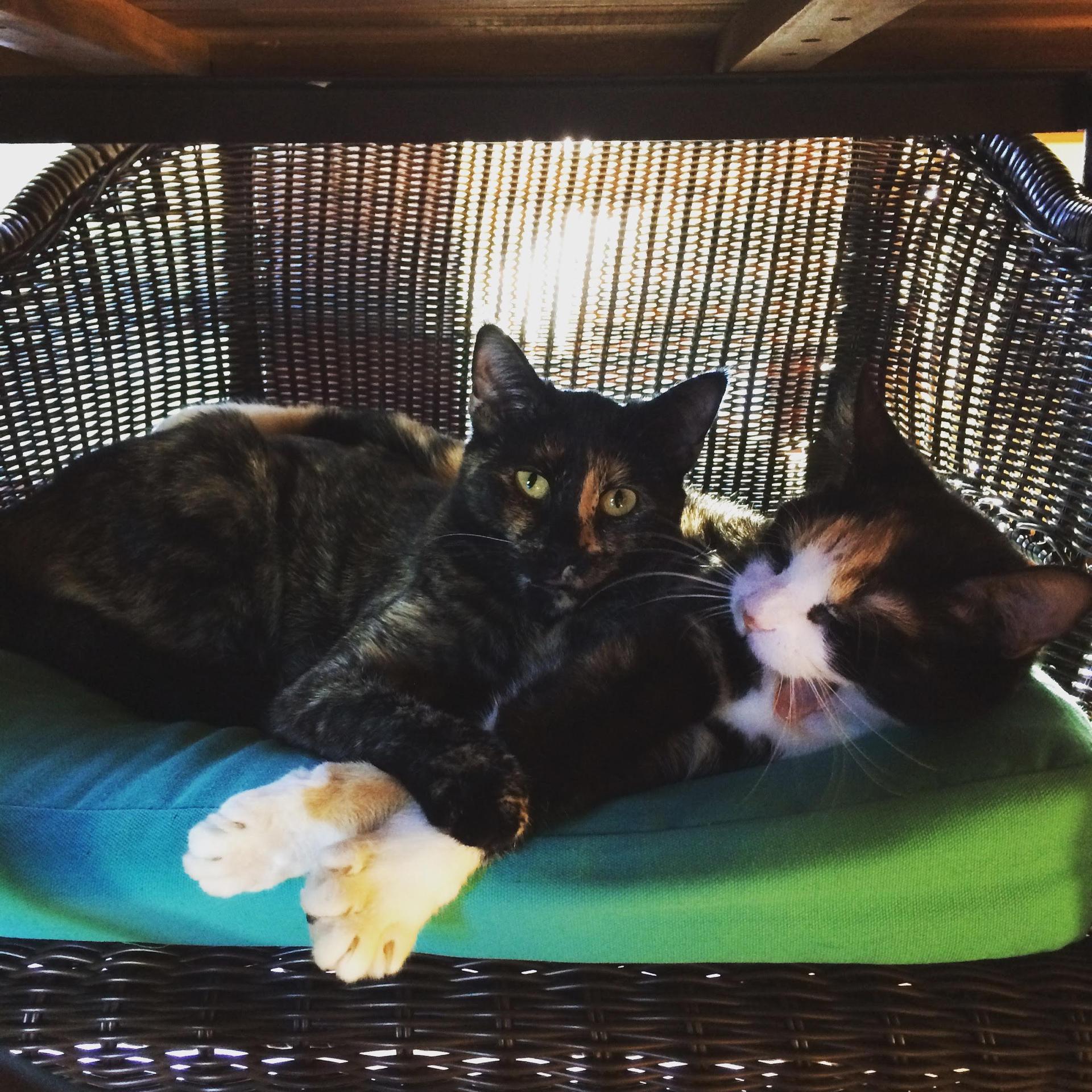 Phoebe & Daisy