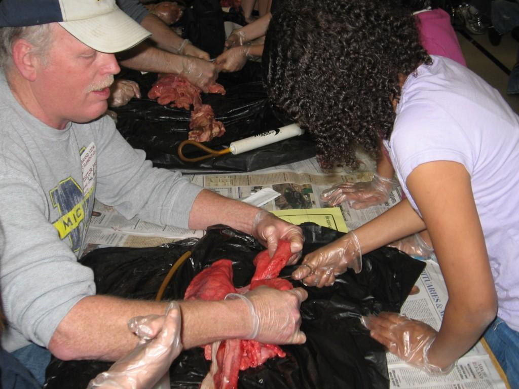 students perform dissection