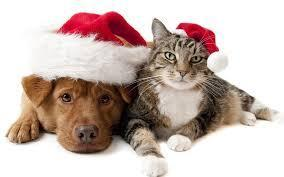 Cmas dog and cat