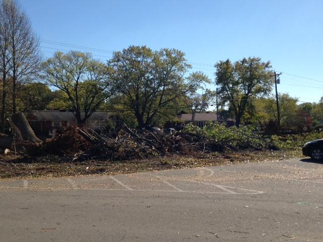 Remains of tree removal in front of school