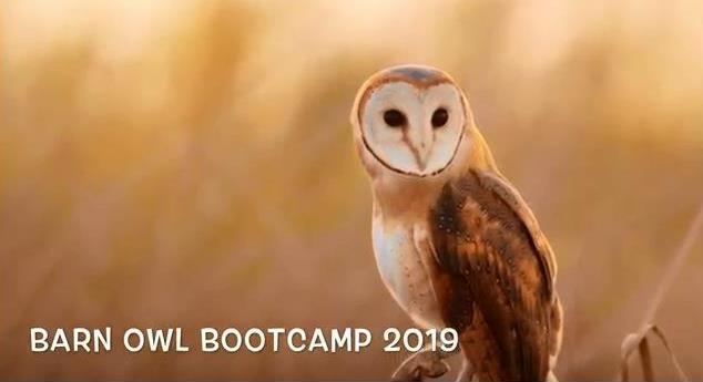 Barn Owl Bootcamp Video Featured Photo
