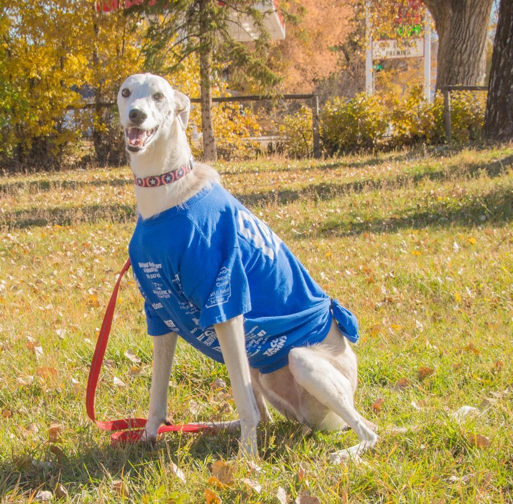 Dog showing pride at homecoming