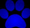 Blue Wildcat Paw