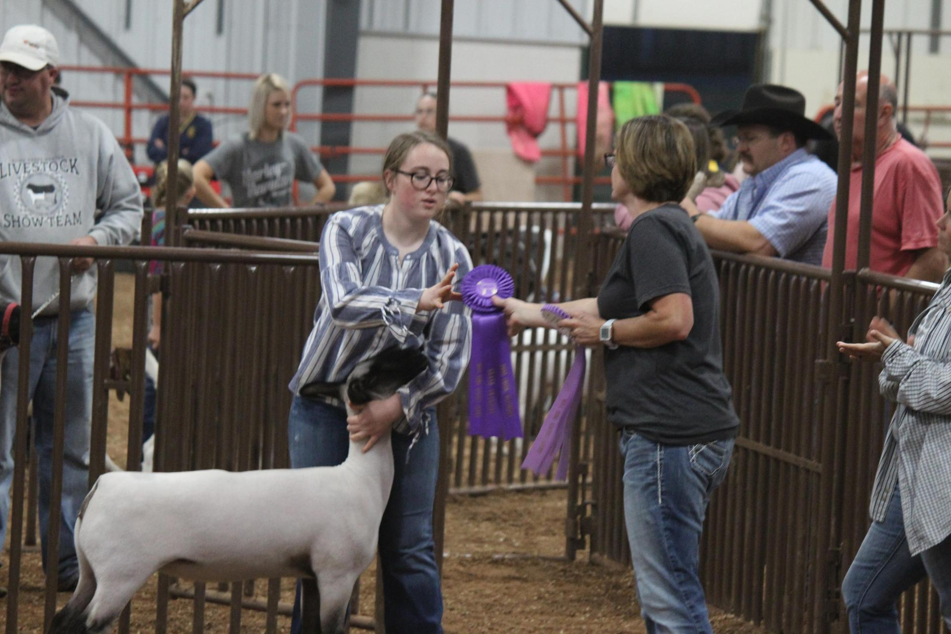 Grand Champion Sheep