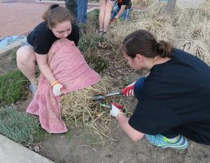 Amelia Craven and Angelica Schoendorf help clean out flower beds in the village.