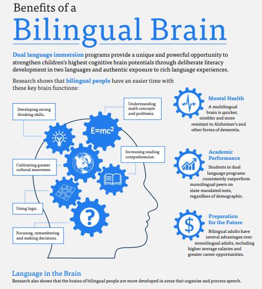 Bilingual Brain graphic