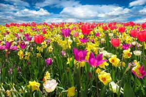Spring flowers filling a field