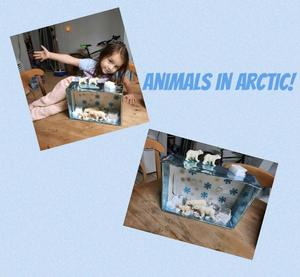 Animals in Artic habitat project collage