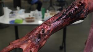 Moulage (fake injuries for training) of a badly injured forearm.