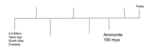 Example Timeline.png