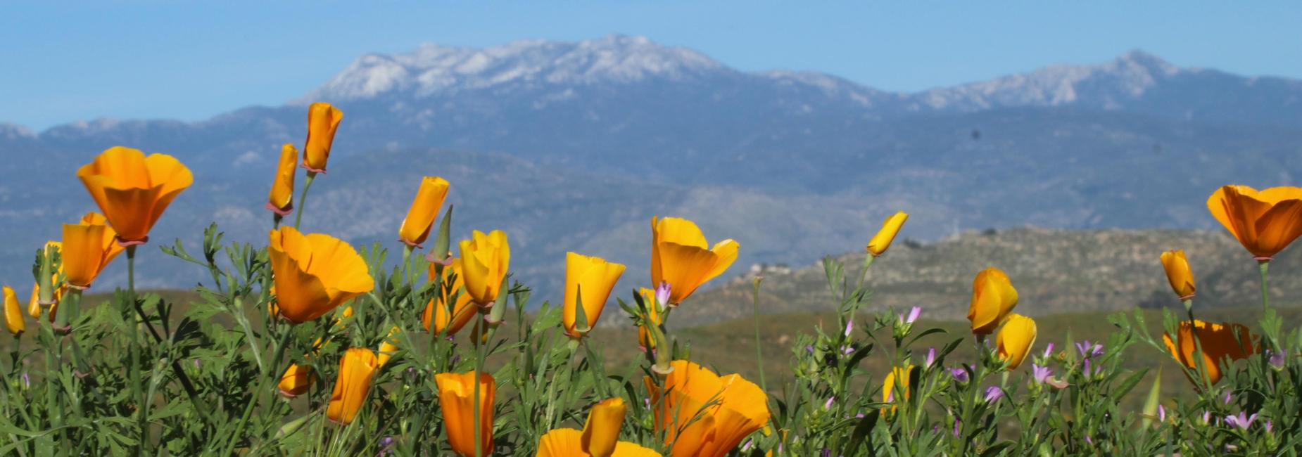 Flower bloom in the hills above Western Center Academy
