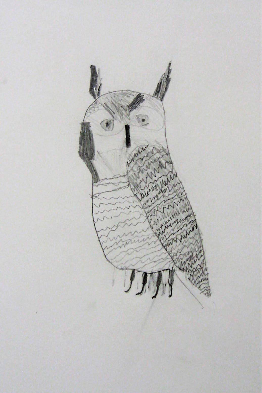 6th grade animal drawing