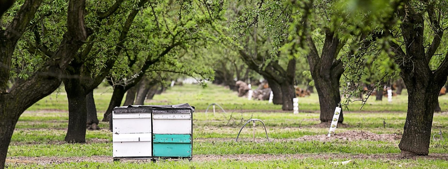 bee boxes sitting in almond orchard