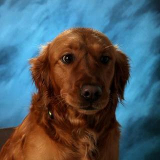 Ms Josie's Profile Photo
