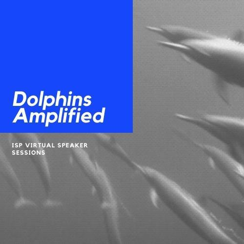 Dolphins Amplified Featured Photo
