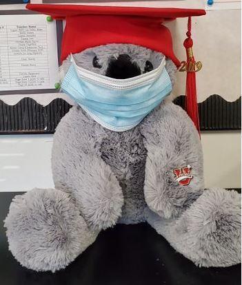 Safe Koala