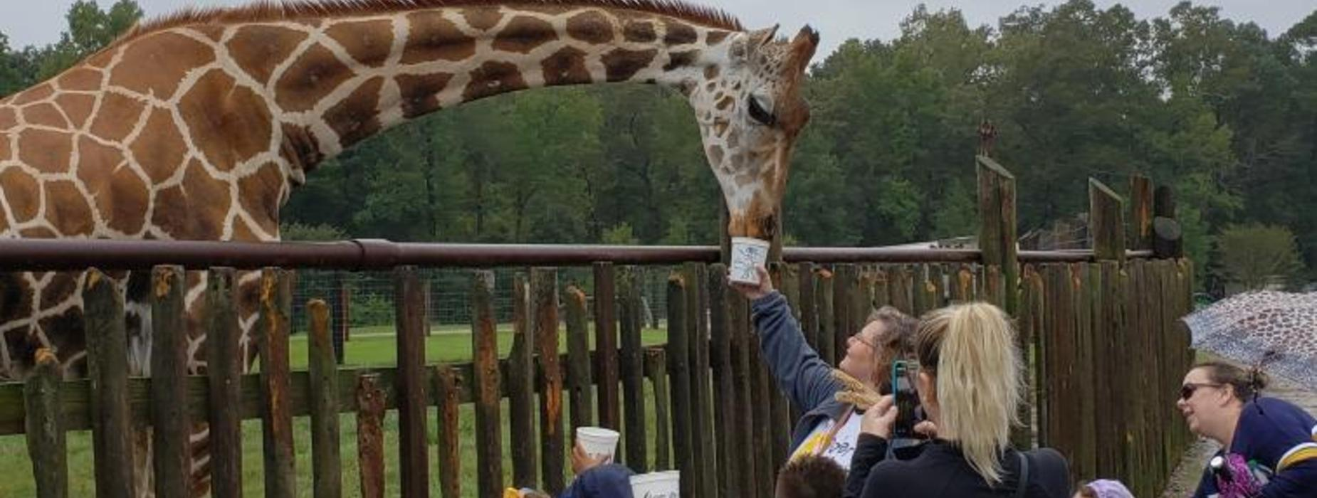 Let's feed the giraffe