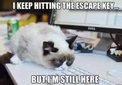 Grumpy Cat wants to escape!
