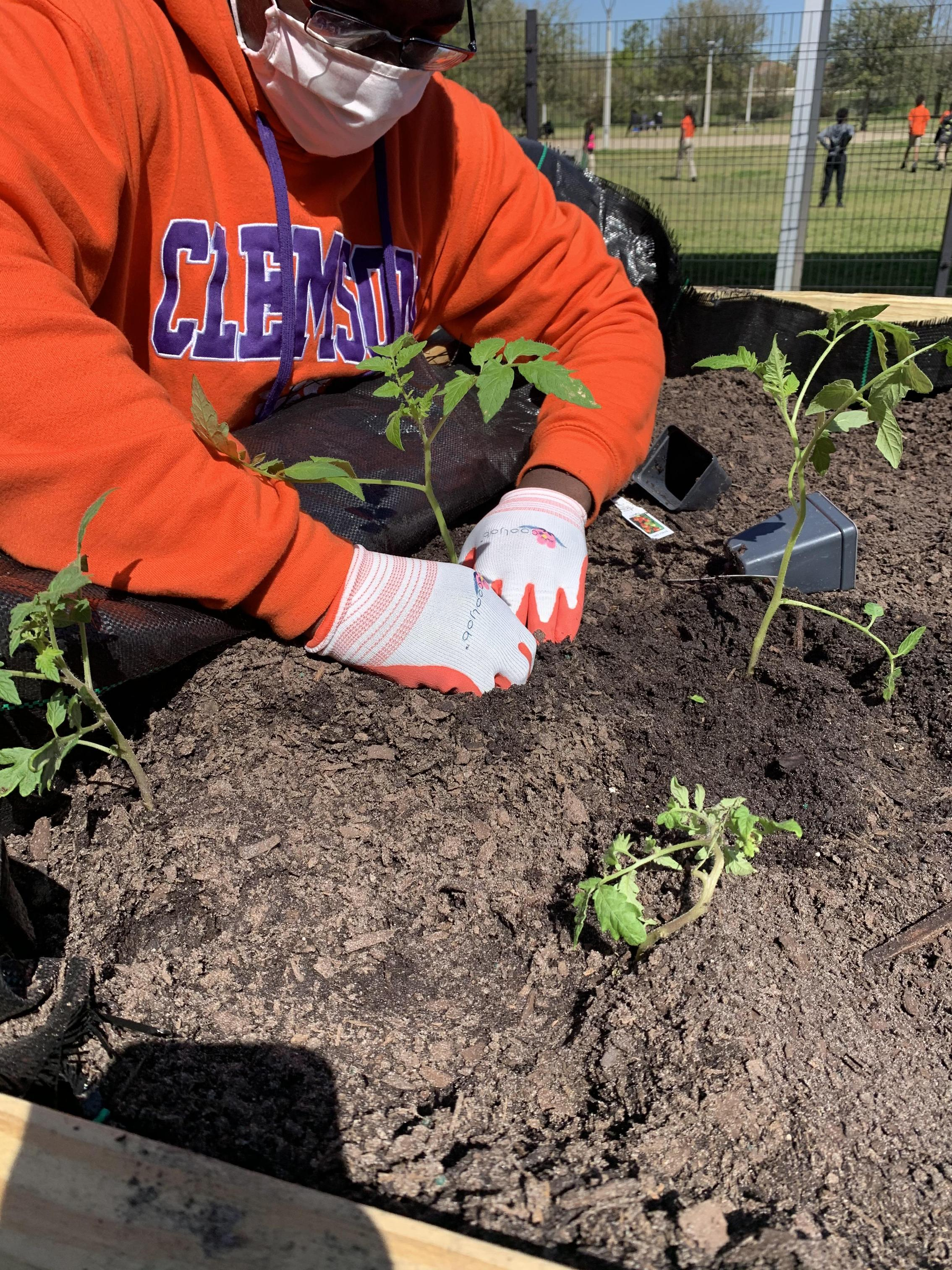 FFA - Agriculture Academy Salsa Project 2020-2021
