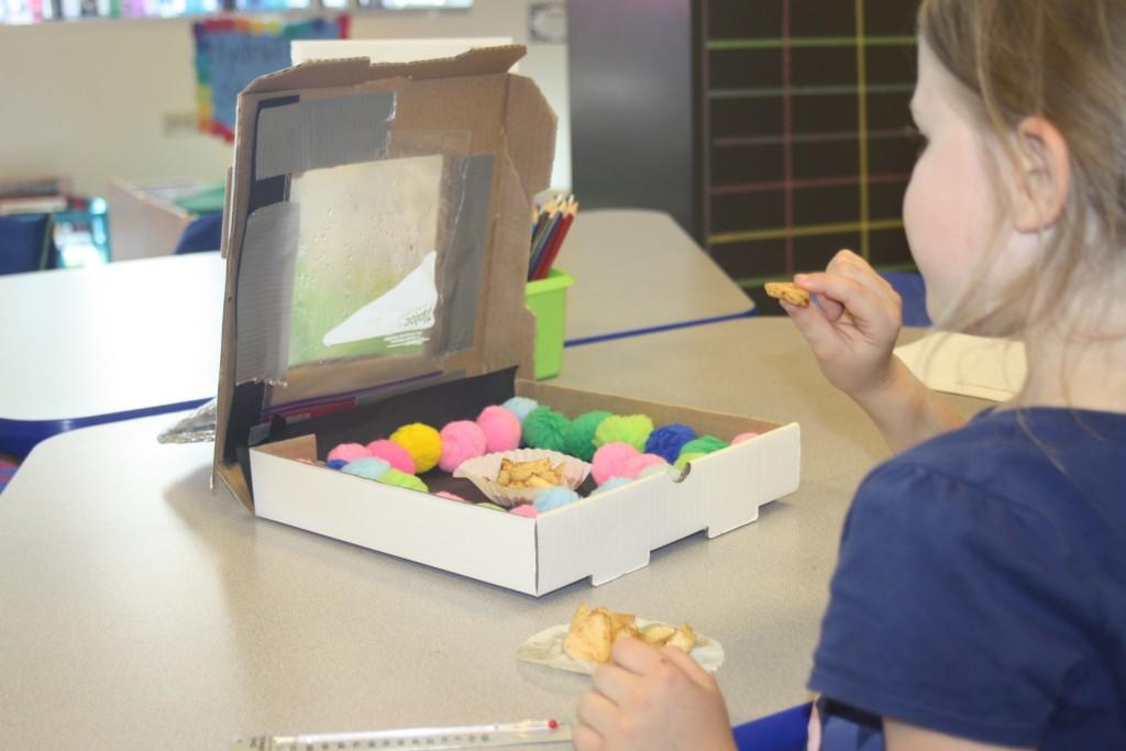 Kindergarteners designed solar ovens to cook apples for the