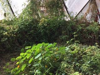 Overgrown geodome