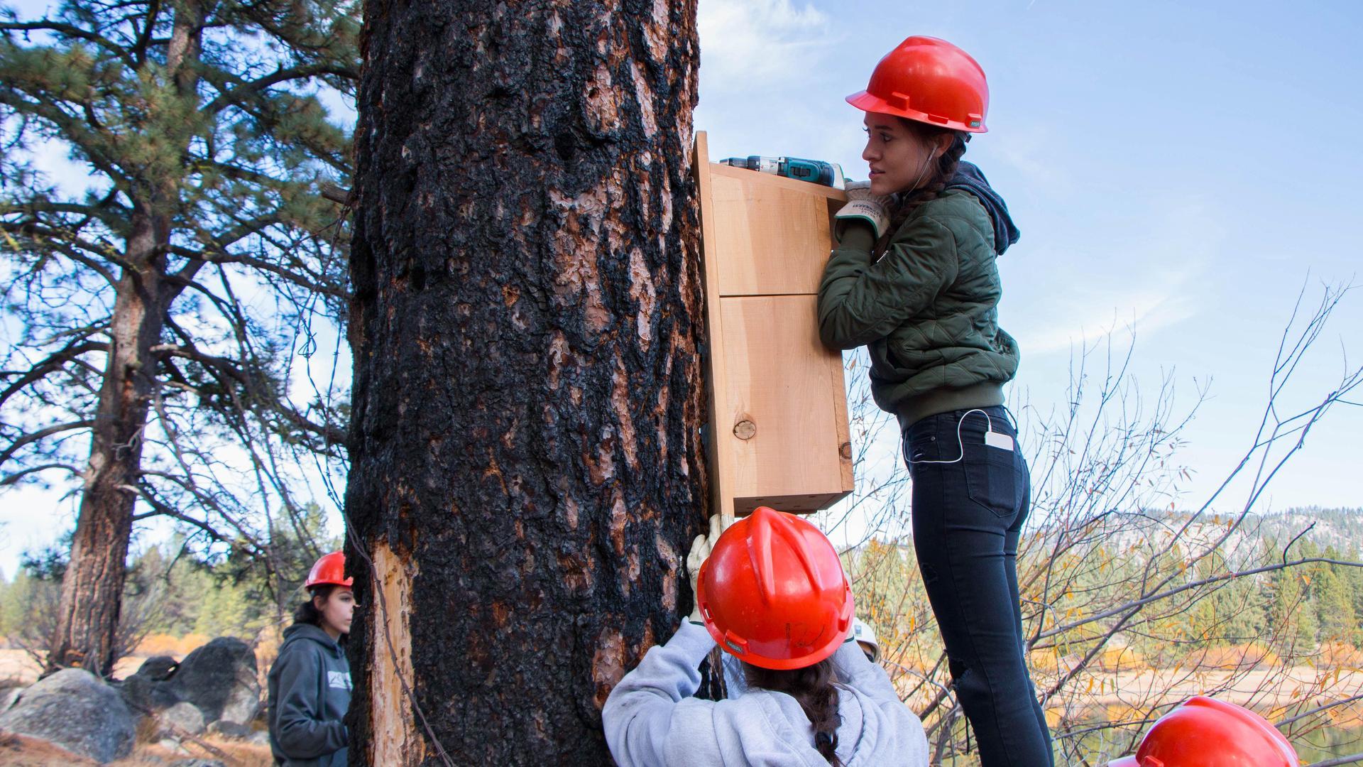 Student Putting up WoodDuct Nesting Box