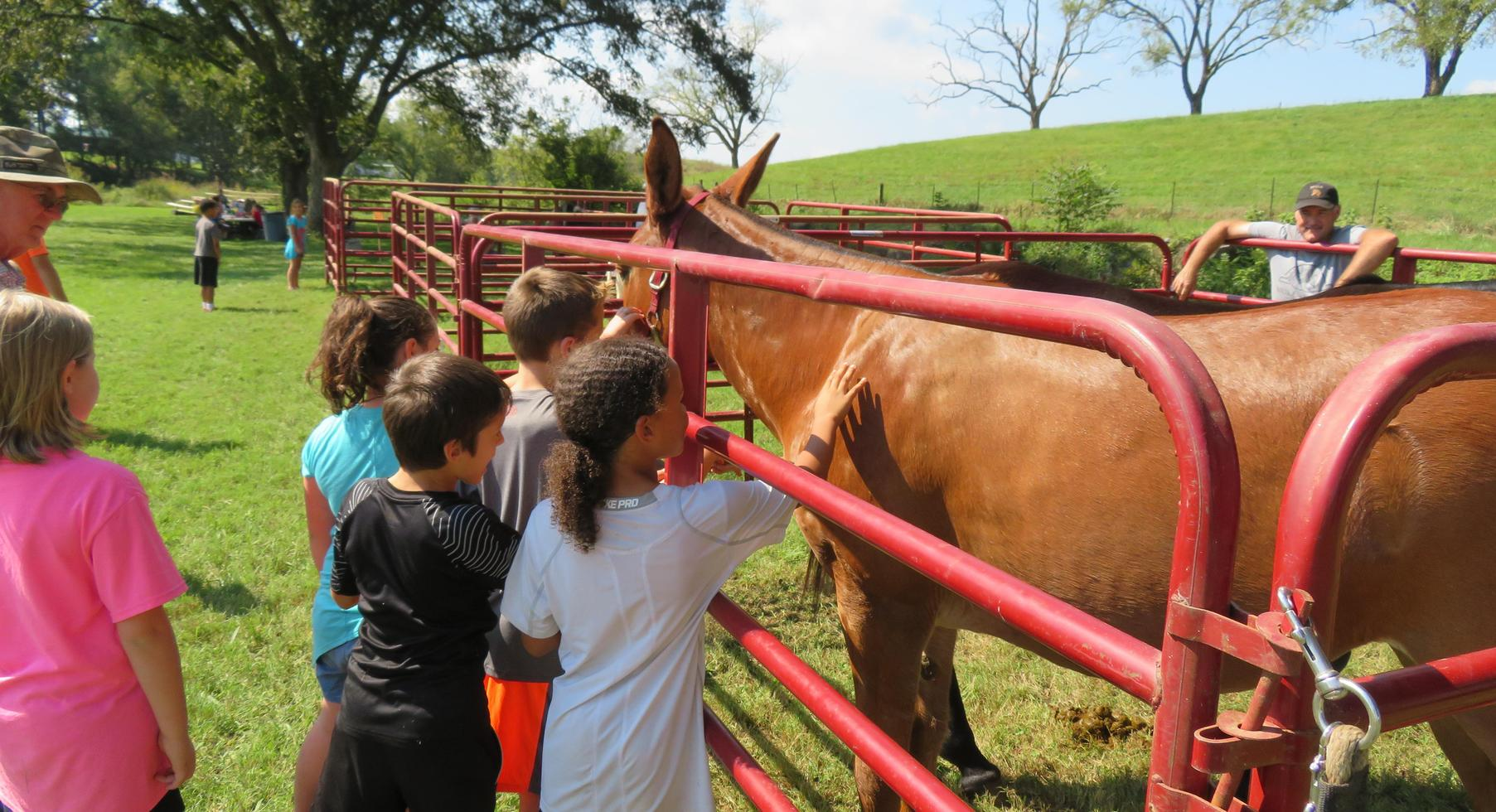 Students petting a horse or mule at 3rd Grade Farm Day.