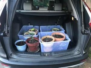 open car trunk with several plant containers with plants in them