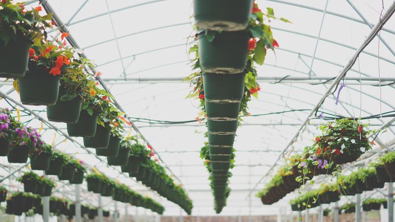Photo of hanging plants