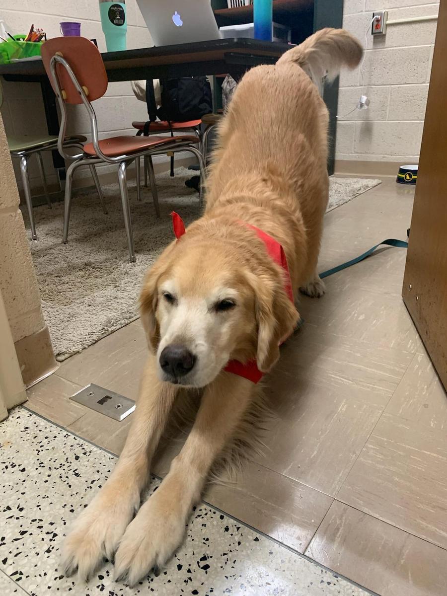 Kennedy Downward Dog