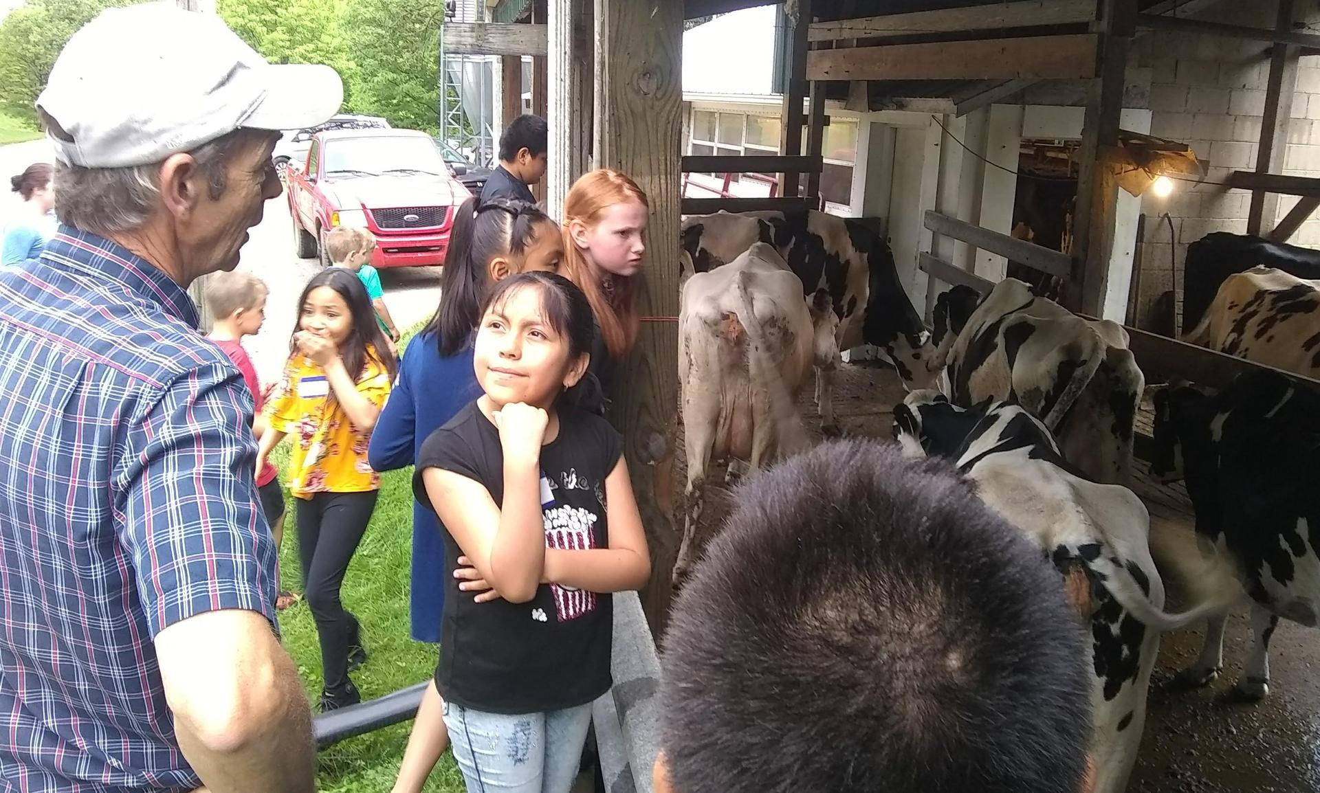 farmer answers questions about dairy cows