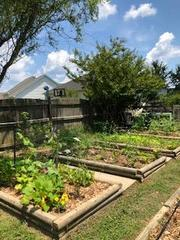 Early Summer Garden Beds