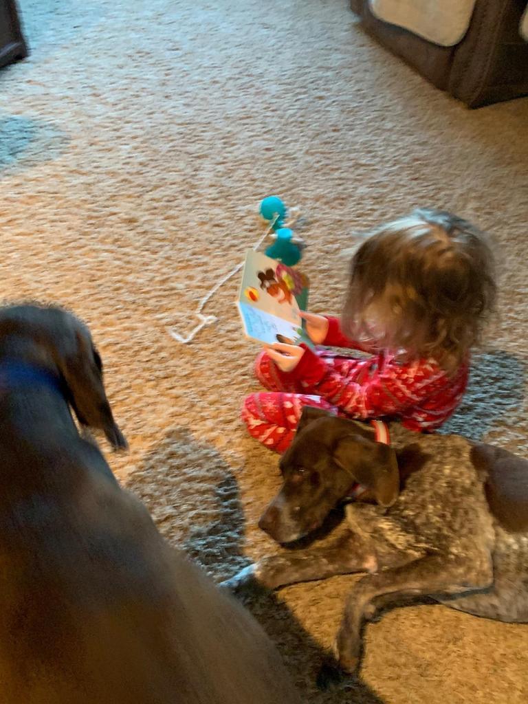 Preschooler reading to her dog