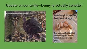 Lenette the turtle