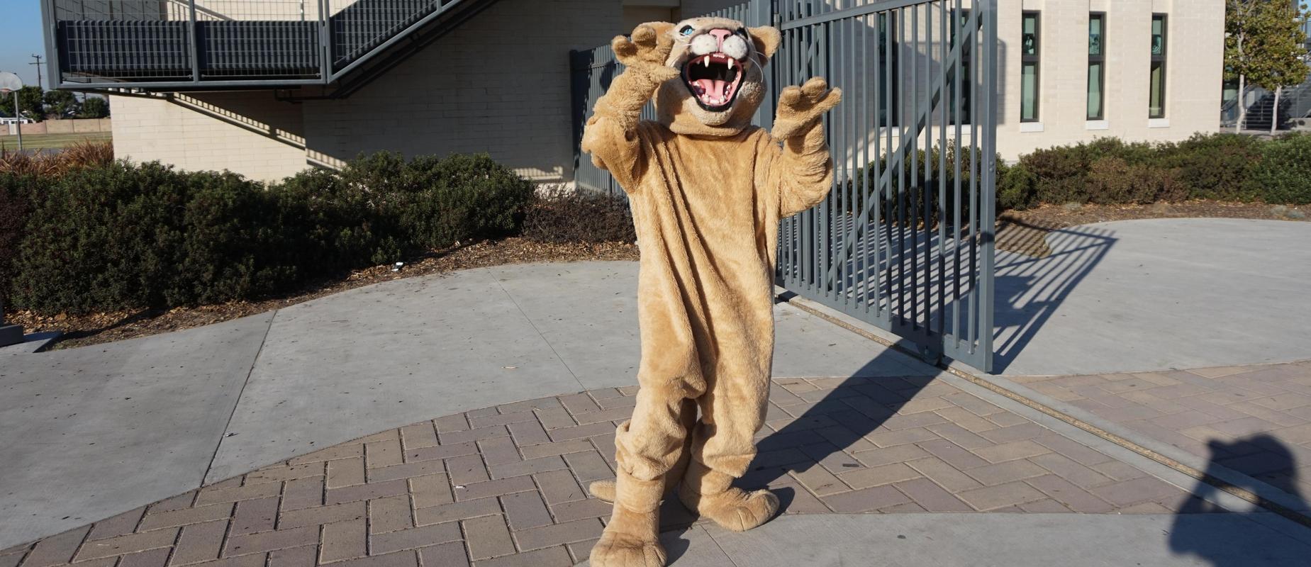 cougar mascot picture