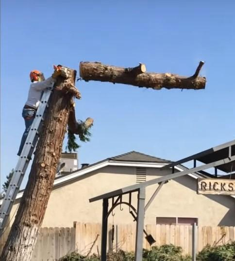Mr. Galloway has chainsaw skills.
