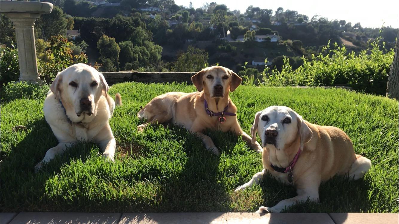 Our three Rescue Dogs: Al, Heidi and Roxy!