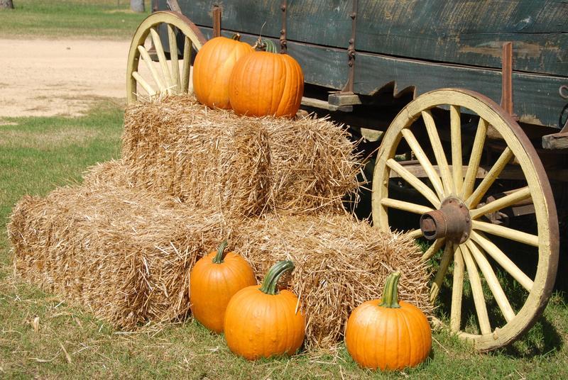 Pumpkins sitting in on hay.
