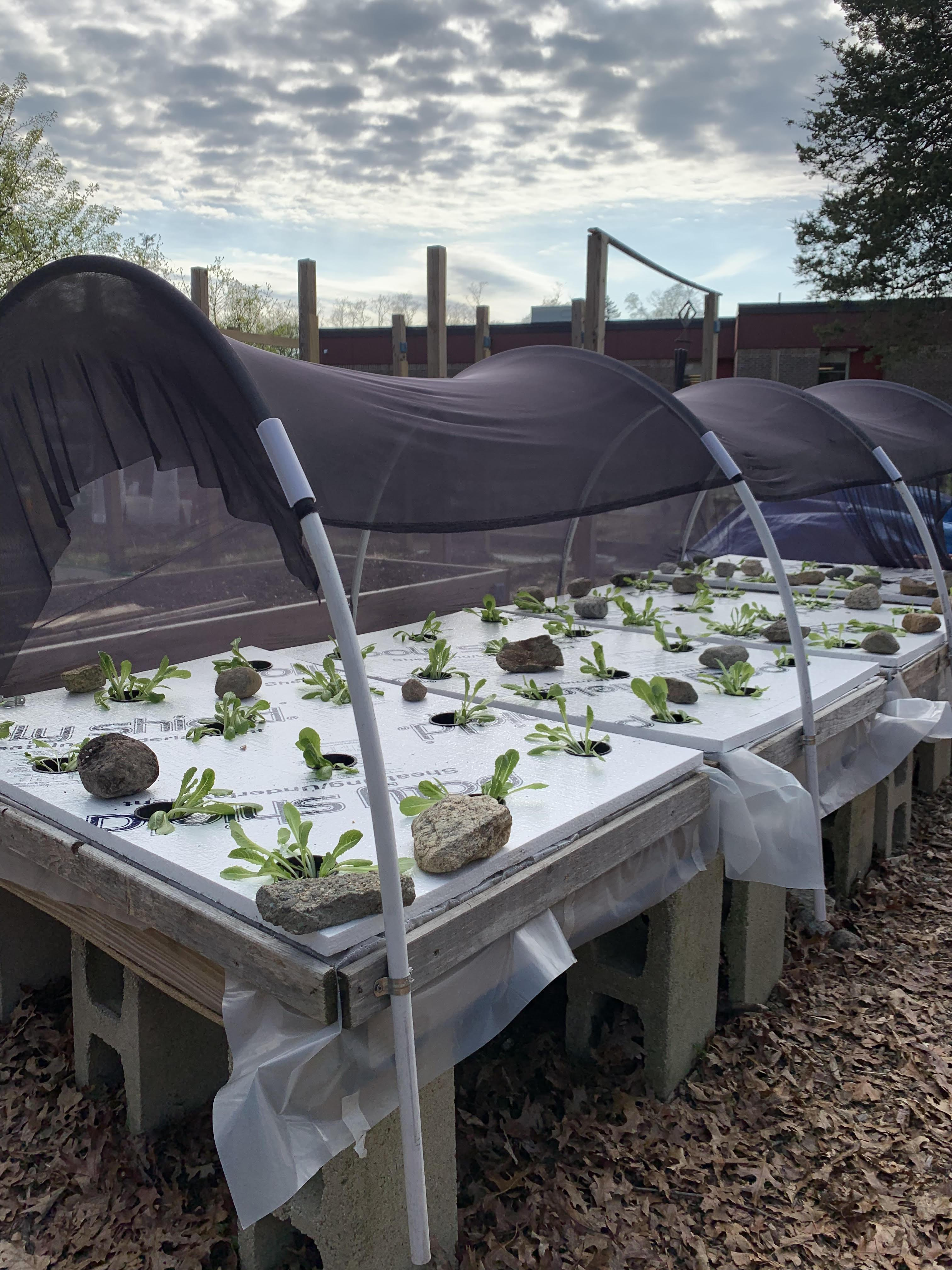 Gr 4 Hydroponic Bed Planting