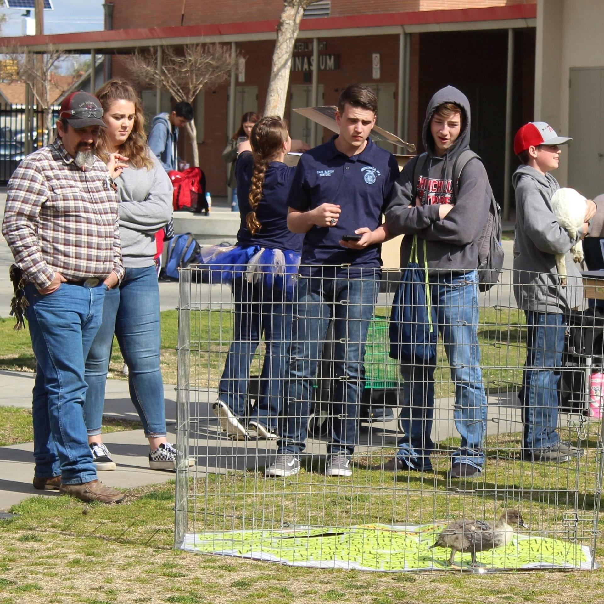 Students and staff having fun at FFA Week