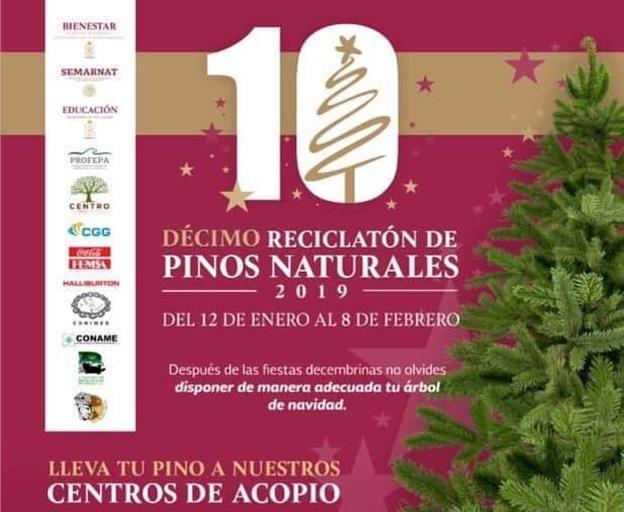 10° Reciclatón de pinos naturales 2019 Featured Photo