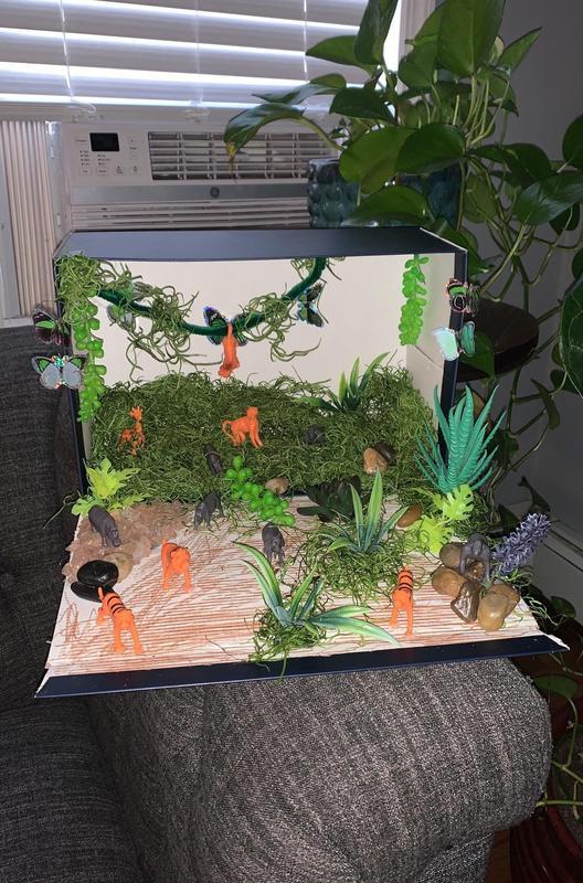 Jungle habitat project