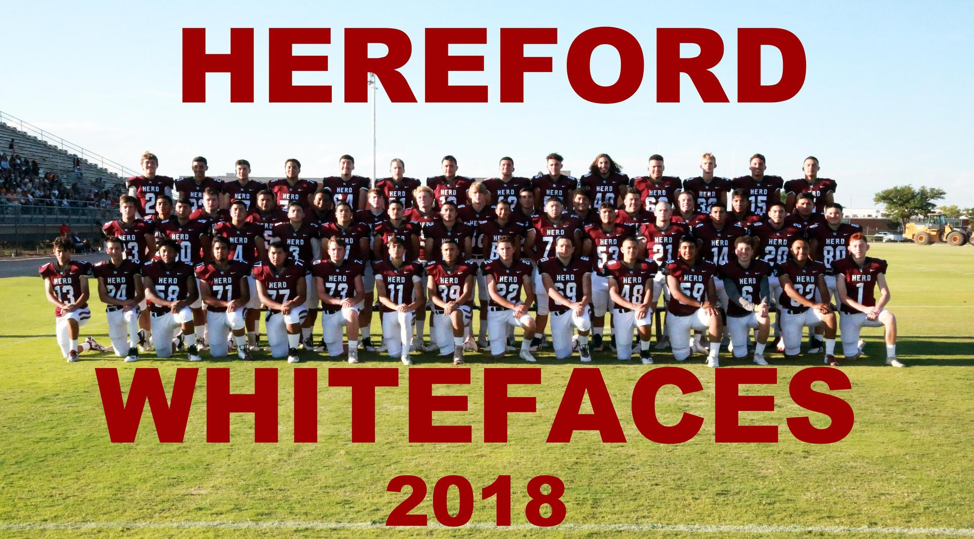 HEREFORD WHITEFACES